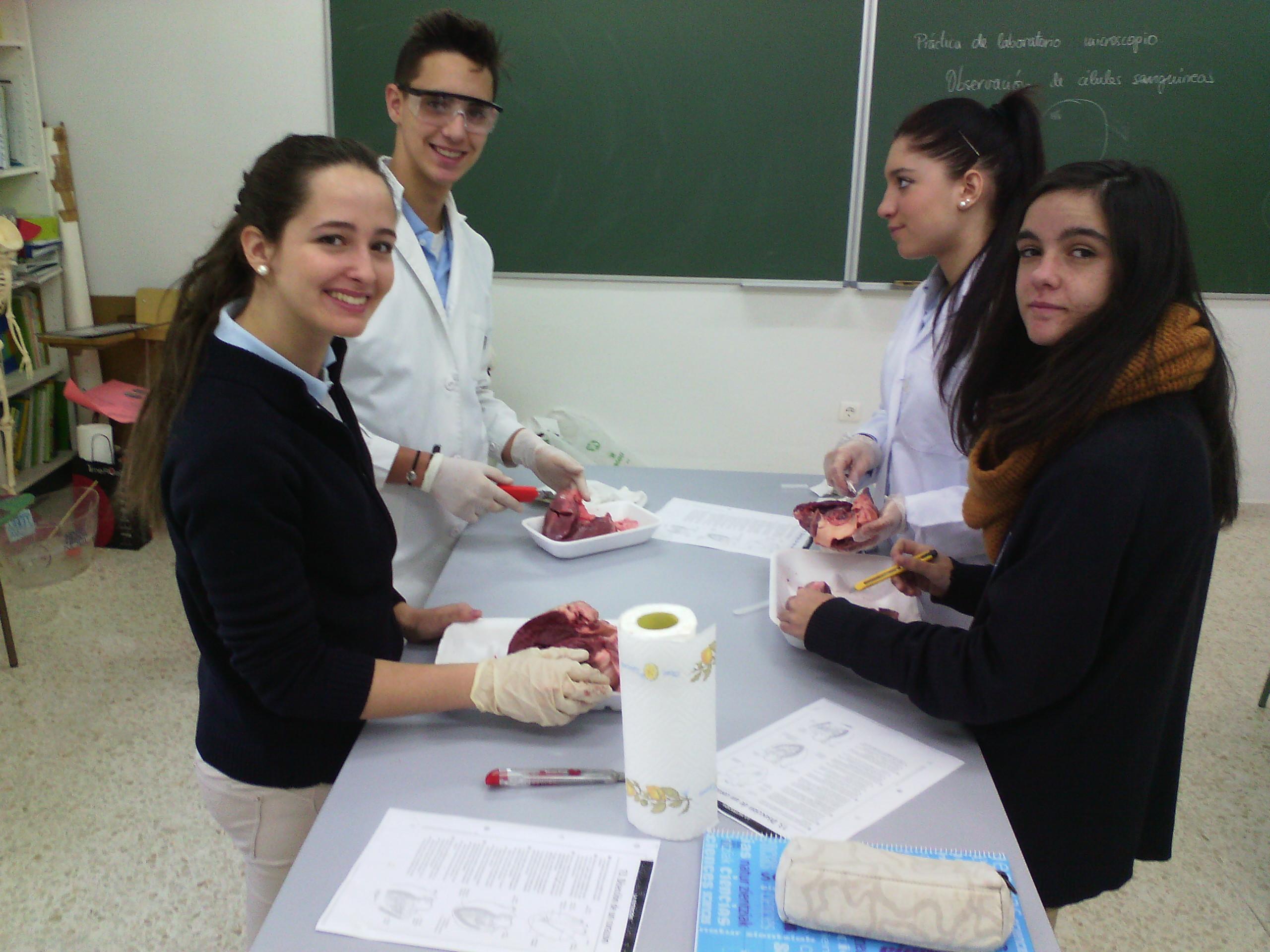Prácticas de laboratorio: Disección de corazón de cerdo